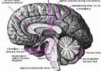 Елена Блаватская о мозге человека