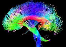 Нейробиологии нужны новые идеи