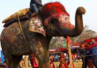 В Непале выбрали самого красивого слона
