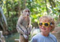Маленькие дети и обезьяны пользуются одним языком жестов